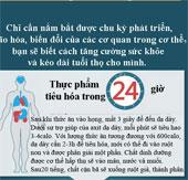Chu kỳ hoạt động của các bộ phận trong cơ thể