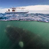 Cá voi khổng lồ áp sát thuyền du lịch