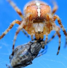 Những lối sống kỳ lạ của loài nhện