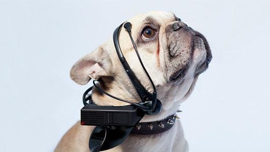 Tai nghe mới giúp cún có thể trò chuyện với... con người