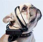 Tai nghe mới giúp cún có thể trò chuyện với con người