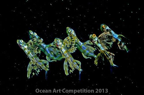 Những sắc màu đại dương năm 2013