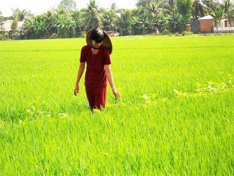 """Hiệu quả """"kép"""" từ việc ứng dụng công nghệ sinh thái trên đồng ruộng"""