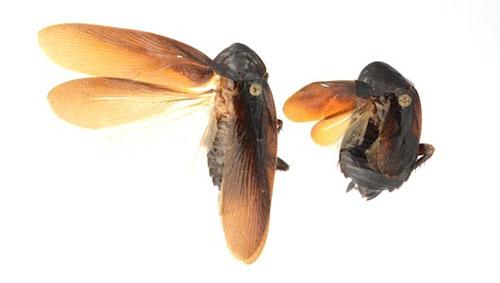 Những phát hiện mới về động vật trong năm 2013