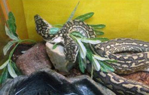 Những con vật có hình dáng kỳ lạ