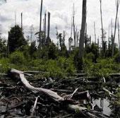 Diện tích rừng bị phá ở Mexico tăng nhanh trong 10 năm