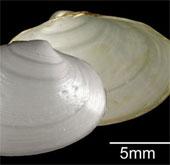 Phát hiện 4 loài sinh vật biển mới