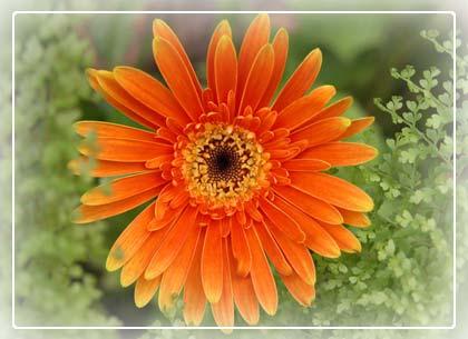 Phương pháp bảo quản một số loài hoa sau thu hoạch