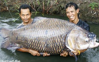 Câu cá chép 120 kg