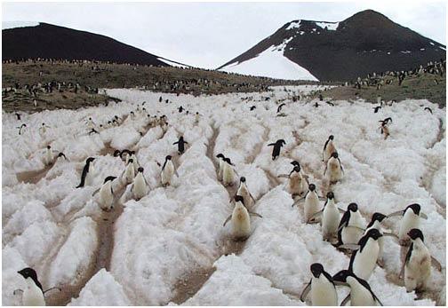 Dấu vết chim cánh cụt đo được chuyển động băng Nam cực