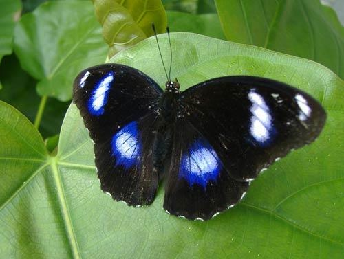 Sự chọn lọc tự nhiên của loài bướm