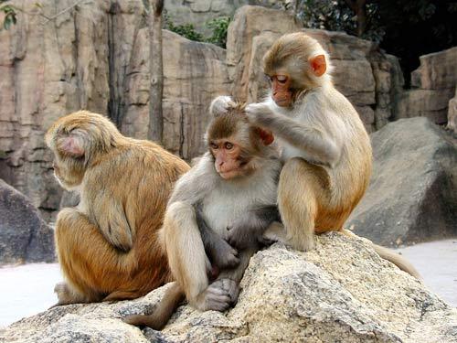 """Khỉ mẹ cũng """"nựng"""" con"""