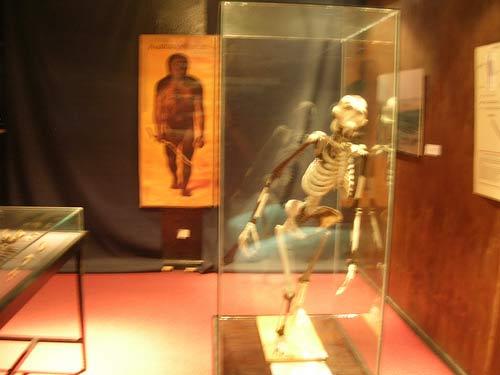 Tranh cãi về việc trưng bày người tiền sử Lucy tại Mỹ