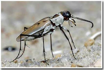 Nghiên cứu thuyết tiến hóa: Đời sống lâu dài của bọ cánh cứng