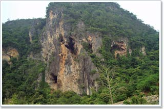 Gấu trúc và khỉ cổ đại từng cạnh tranh nguồn thức ăn