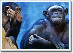 Nhân bản giống khỉ bằng phương pháp vô tính ít được quan tâm