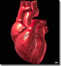 Tạo ra quả tim đập trong phòng thí nghiệm