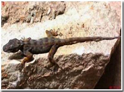 Khám phá bốn loài thằn lằn mới ở Việt Nam