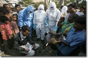 Dịch cúm gia cầm đang hoành hành tại Ấn Độ