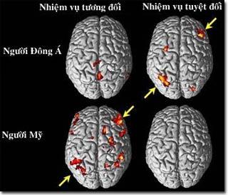 Văn hóa ảnh hưởng đến hoạt động của não bộ