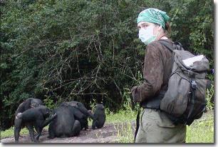 Virus của con người đe doạ các loài linh trưởng