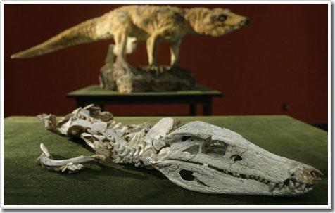 Phát hiện hóa thạch mới liên quan đến loài cá sấu ngày nay