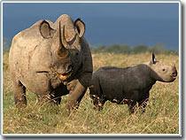 Chú tê giác mang tên Kofi Annan