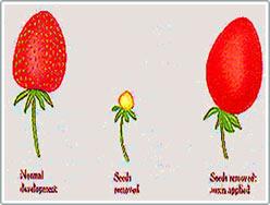Từ chất kích thích tăng trưởng auxin đến thuốc diệt cỏ