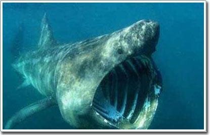Những bộ răng khổng lồ của biển cả