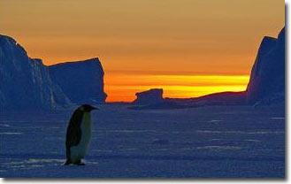 Biến đổi khí hậu có thể xóa sổ loài chim cánh cụt chúa