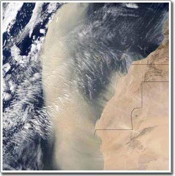 Bão bụi từ sa mạc Sahara làm số lượng phiêu sinh vật ở đông Đại Tây Dương bùng nổ
