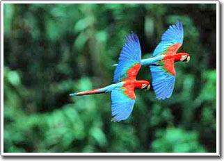 Mâu thuẫn về nguồn gốc ra đời của loài chim