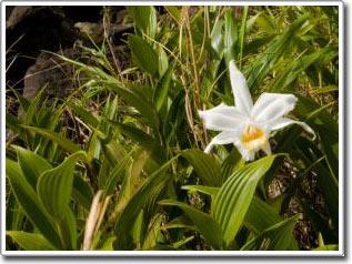 """""""Mã vạch"""" DNA dùng trong nhận diện thực vật"""