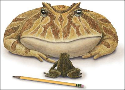 Phát hiện loài ếch cổ đại từng ăn thịt khủng long