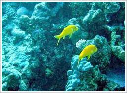 Hợp tác bảo vệ rạn san hô vùng biển Tây Nam