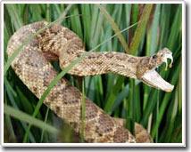 Tại sao con người sợ rắn?