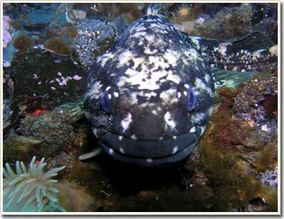 Lần đầu tiên phát hiện cá ngủ đông