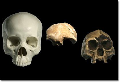 Xương người cổ tí hon mới được phát hiện ở Palau