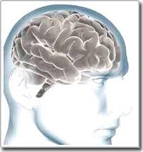 Những người sống không cần... não