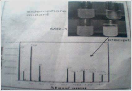 Xử lý ô nhiễm phóng xạ urani bằng vi khuẩn