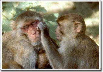 Ở hầu hết các loài, chung thủy chỉ là điều tưởng tượng