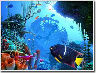 Những bí mật của biển: Âm thanh và các sinh vật biển