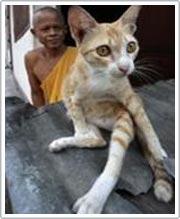 Cúm mèo xuất hiện ở Thái Lan