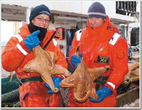 Sinh vật biển khổng lồ ở Nam Cực