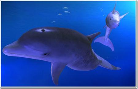 Cá heo không thể bơi quá nhanh