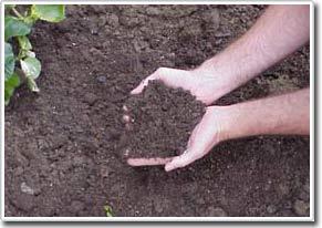 Đất đặc biệt để khắc phục thay đổi khí hậu