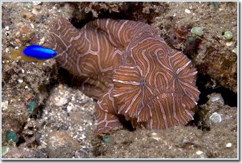 Tìm thấy loài cá có cặp mắt kỳ lạ