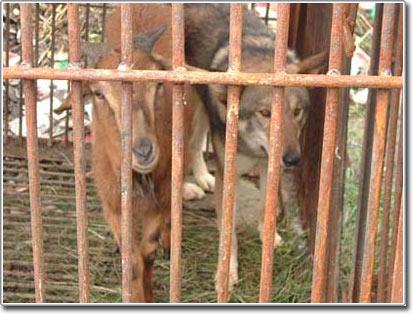 Cặp đôi kỳ lạ tại vườn thú Trung Quốc