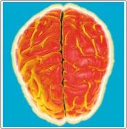 Công việc nhàm chán khiến não ngu đi