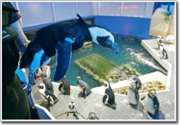 May áo bơi cho chim cánh cụt